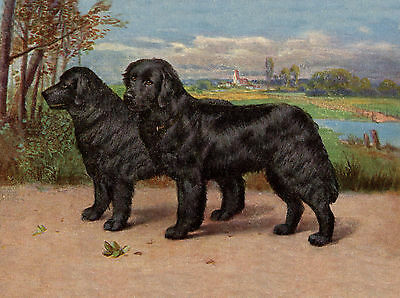 Newfoundland Two Black Dogs Lovely Dog Greetings Note Card
