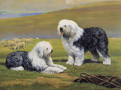 Old English Sheepdog Dogs And Sheep In Rural Scene Dog Greetings Note Card