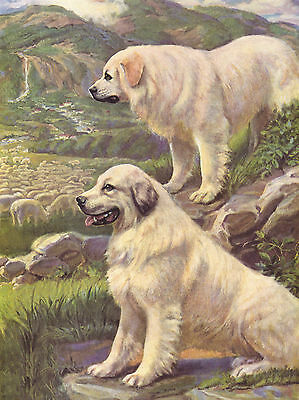 PYRENEAN MOUNTAIN TWO DOGS LOVELY DOG GREETINGS NOTE CARD