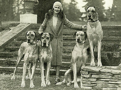 Great Dane Vintage Image Lady And Dogs Lovely Dog Greetings Note Card