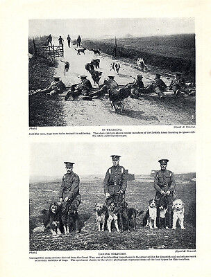 Bearded Collie Border Collie Original Vintage Dog Print Page 1934 War Dogs