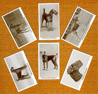 Airedale Terrier Named Set Of 6 Dog Photo Trade Cards