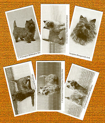 CAIRN TERRIER  Named Set Of 6 Dog Photo Trade Cards