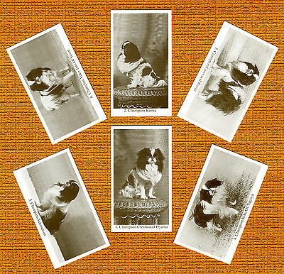 JAPANESE CHIN  Named Set Of 6 Dog Photo Trade Cards
