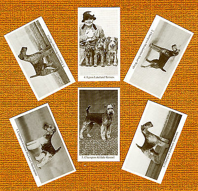 LAKELAND TERRIER Named Set Of 6 Dog Photo Trade Cards