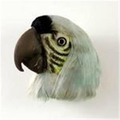 Parrot Light-Green Feathered Magnet Stone Resin Free Items b4u a4u