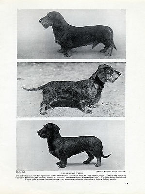 Wire Haired Dachshund Three Named Dogs Old Original Dog Print Page From 1934