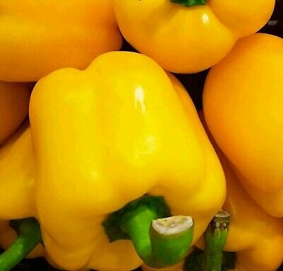 COMBINED S//H HOT Banana Pepper Seeds SEE OUR STORE FOR OVER 900 RARE SEEDS