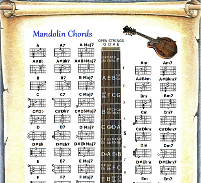 """Mandolin Chords Poster 13""""x19"""" With Note Locator - 60 Chords"""