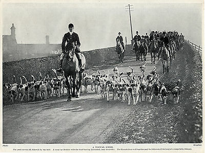 Foxhound Hunt Pack At Tattenhall Cheshire Nice Old Image 1934 Dog Print Page