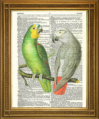 """VINTAGE DICTIONARY PAGE PRINT: African Green and Grey Parrots Birds Art (8x10"""")"""