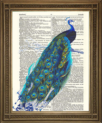 PEACOCK DICTIONARY PAGE PRINT: Vintage Blue Peacock Bird Art Illustration