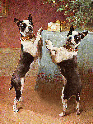 Boston Terrier Two Dogs Under The Christmas Tree Dog Greetings / Note Card