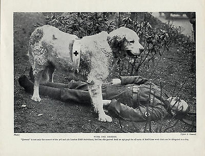 Great Pyrenees Pyrenean Mountain Red Cross War Dog And Soldier Old 1934 Print