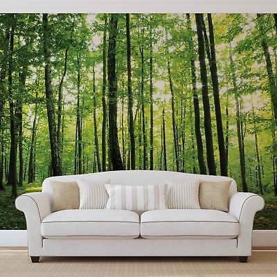 WALL MURAL PHOTO WALLPAPER PICTURE (186VEVE) Forest Wood Landscape Trees