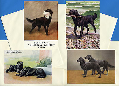 Flat Coated Retriever Pack Of 4 Vintage Style Dog Print Greetings Note Cards #2