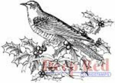 Image result for deep red bird & holly stamp