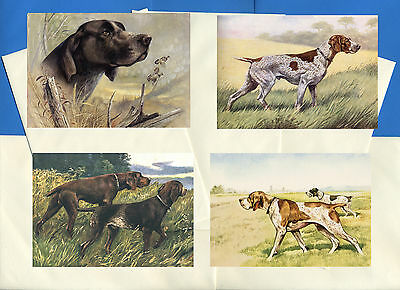 German Shorthaired Pointer 4 Vintage Style Dog Print Greetings Note Cards #1