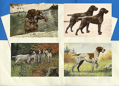 German Wirehaired Pointer Pack Of 4 Vintage Style Dog Print Greetings Note Cards