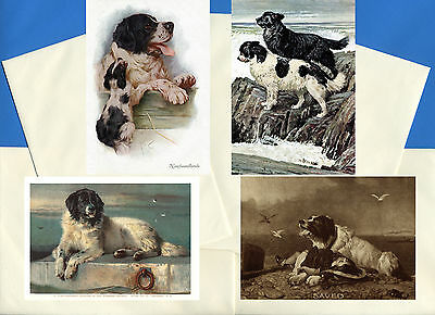 Newfoundland Pack Of 4 Vintage Style Dog Print Greetings Note Cards #4
