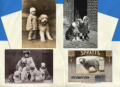 Old English Sheepdog Pack Of 4 Vintage Style Dog Print Greetings Note Cards #3