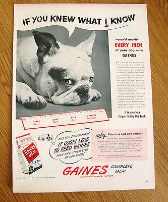 1947 Gaines Dog Food Ad   Boston Terrier Dog