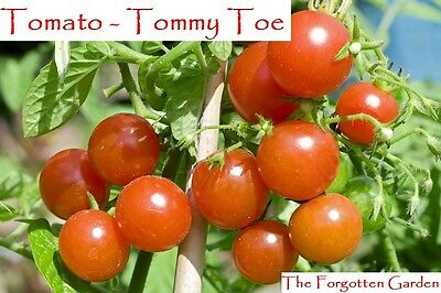 Tomato Seed Tommy Toe 25 Seeds Heirloom Vegetable Garden Indeterminate Vine