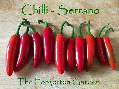 Chilli Seed Serrano 25 Seeds Heirloom Vegetable Garden Chili Chile Scoville