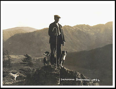 Shepherd And Border Collie Dogs On Borrowdale Lovely Dog Print Poster