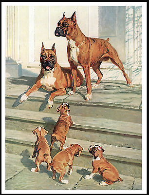 Boxer Dogs And Puppies Lovely Vintage Style Dog Print Poster