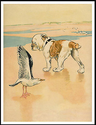 English Bulldog Meets A Sea Gull On Beach Lovely Vintage Style Dog Print Poster