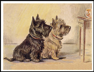 Cairn Terrier Dogs Watching A Goldfish Charming Vintage Style Dog Print Poster