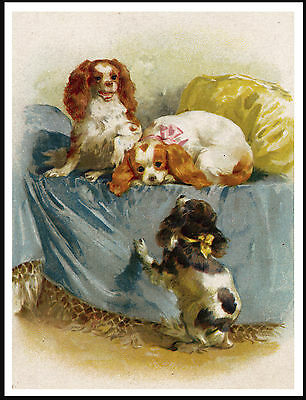 Cavalier King Charles Toy Spaniel Dogs Lovely Vintage Style Dog Print Poster