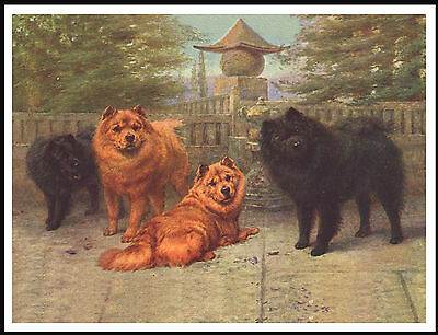 Chow Chow Dog Group Lovely Vintage Style Dog Print Poster