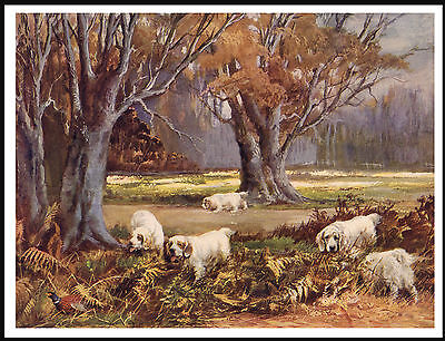 Clumber Spaniel Group Of Dogs At Work Lovely Vintage Style Dog Print Poster