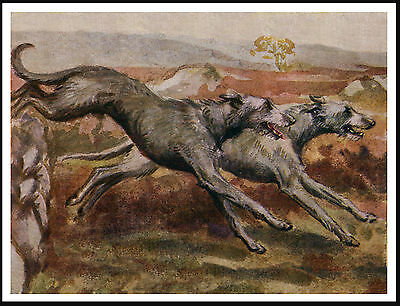 Scottish Deerhound Dogs Hunting Lovely Image Dog Print Poster