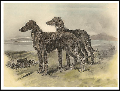Scottish Deerhound Two Dogs In A Highland Setting Lovely Image Dog Print Poster