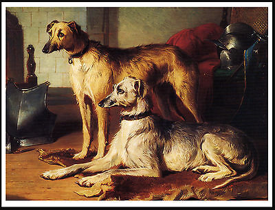 Scottish Deerhound Two Dogs Lovely Classic Image Dog Print Poster