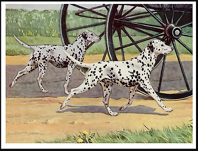 Dalmatian Dogs Following Carriage Lovely Vintage Style Dog Art Print Poster