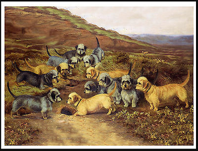 Dandie Dinmont Terrier Large Group Of Dogs Lovely Dog Print Poster