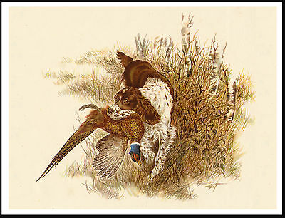 English Springer Spaniel Dog With Pheasant Great Vintage Style Dog Print Poster