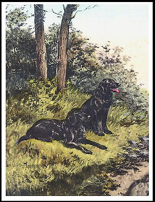 Flat Coated Retriever Two Dogs Lovely Dog Print Poster