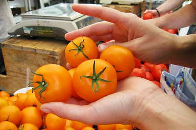 Tomato Jubilee (Lycopersicon Esculentum) Great Garden Vegetable 1,000 Seeds