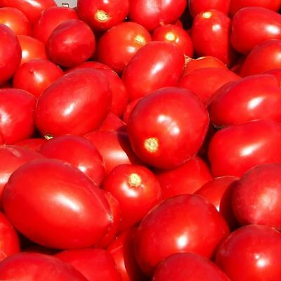 Tomato Rio Grande (Lycopersicon Esculentum) Great Garden Vegetable 100 Seeds