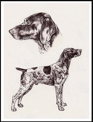German Shorthaired Pointer Lovely Dog Sketch Print Poster