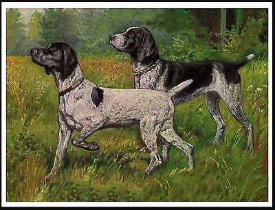 German Shorthaired Pointer Two Dogs Lovely Dog Print Poster