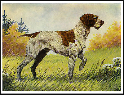 German Wirehaired Pointer Standing Dog Lovely Dog Print Poster