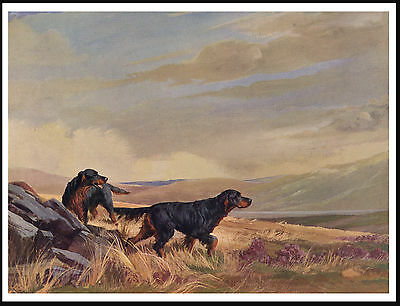 Gordon Setter Two Dogs In Moorland Scene Lovely Vintage Style Dog Print Poster