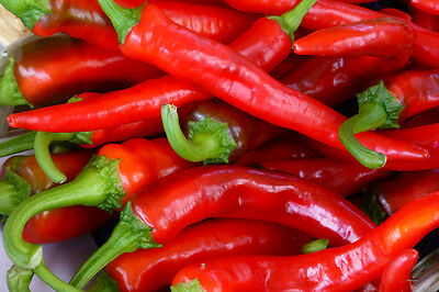 Pepper Hot Portugal (Capsicum annuum) Great Heirloom Vegetable Garden - 50 Seeds