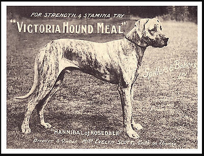 Great Dane  Lovely Old Style Dog Food Advert On Dog Print Poster